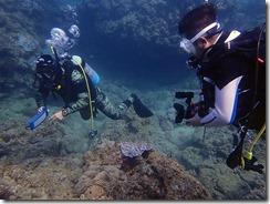 okinawa diving1340