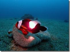okinawa diving1347