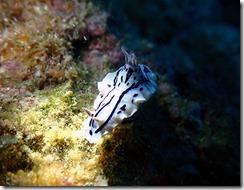 okinawa diving1350