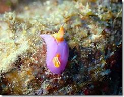 okinawa diving1352