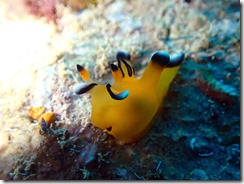 okinawa diving1356