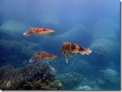 okinawa diving1359