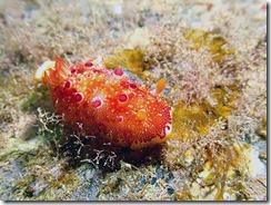 okinawa diving1374