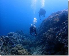 okinawa diving1382