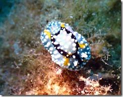 okinawa diving1383