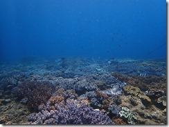 okinawa diving1384
