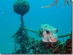 okinawa diving1385