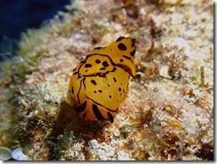 okinawa diving1389