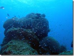 okinawa diving1390