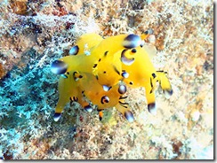 okinawa diving1401