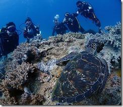 okinawa diving1414