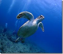 okinawa diving1415