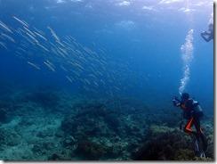 okinawa diving1418