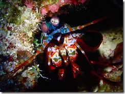 okinawa diving1425