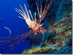 okinawa diving1427