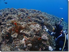 okinawa diving1428