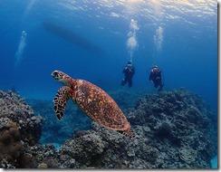 okinawa diving1429