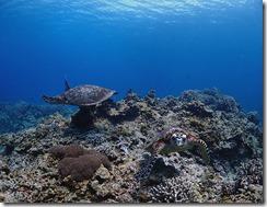 okinawa diving1430