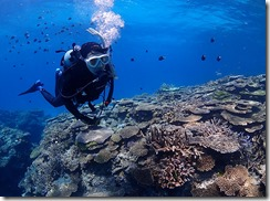 okinawa diving1433