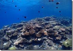 okinawa diving1434