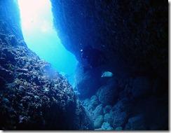 okinawa diving1442