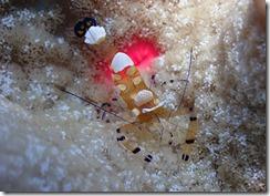 okinawa diving1446