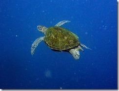 okinawa diving1447
