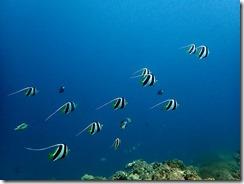 okinawa diving1448