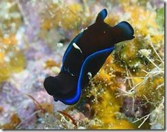 okinawa diving1449