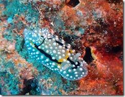 okinawa diving1450