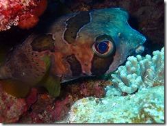 okinawa diving1453