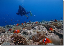 okinawa diving1454