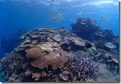 okinawa diving1455