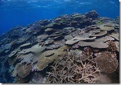 okinawa diving1456