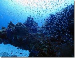 okinawa diving1457