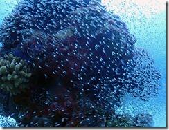 okinawa diving1458