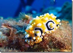 okinawa diving1461