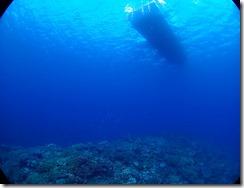 okinawa diving1463