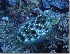 okinawa diving1464
