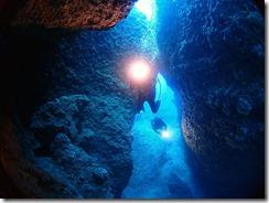 okinawa diving1465