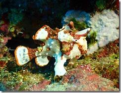 okinawa diving1469