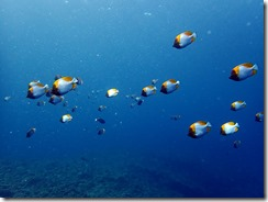 okinawa diving1470