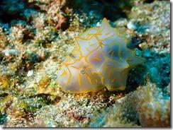 okinawa diving1472