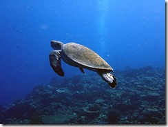 okinawa diving1475