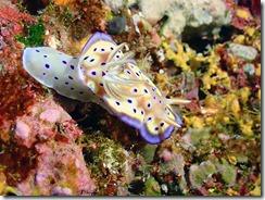okinawa diving1477