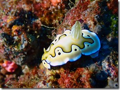 okinawa diving1478