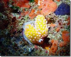 okinawa diving1480