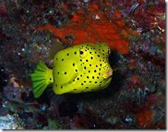 okinawa diving1481