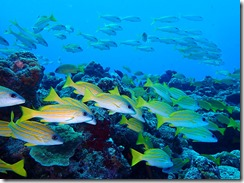okinawa diving1483