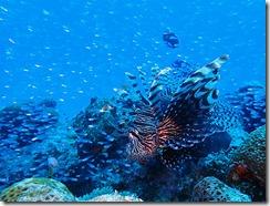okinawa diving1486